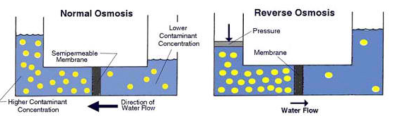 Diagrams illustrating two processes of osmosis